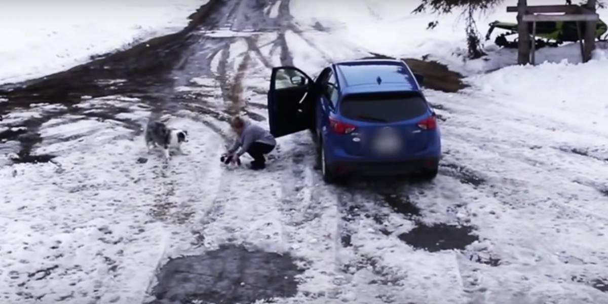 Video muestra cómo perro Border Collie evita que su amigo Chihuahua sea atropellado
