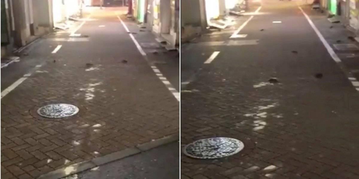 Vídeos mostram ratos tomando conta das ruas após tufão Hagibis no Japão