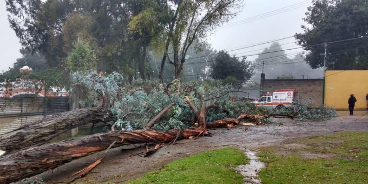 Un muerto y dos heridos tras caer árbol en San Lucas Sacatepéquez