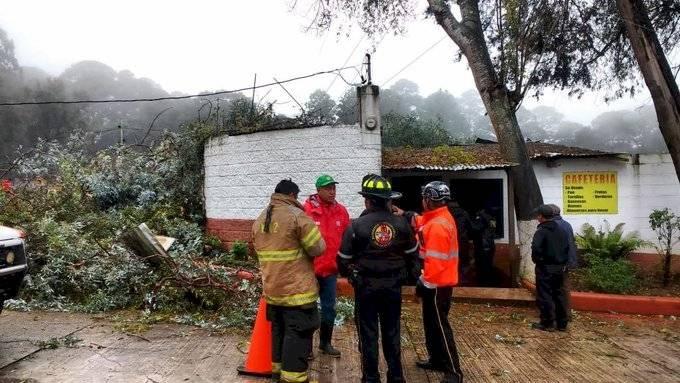 Árbol cae en restaurante en San Lucas Sacatepéquez