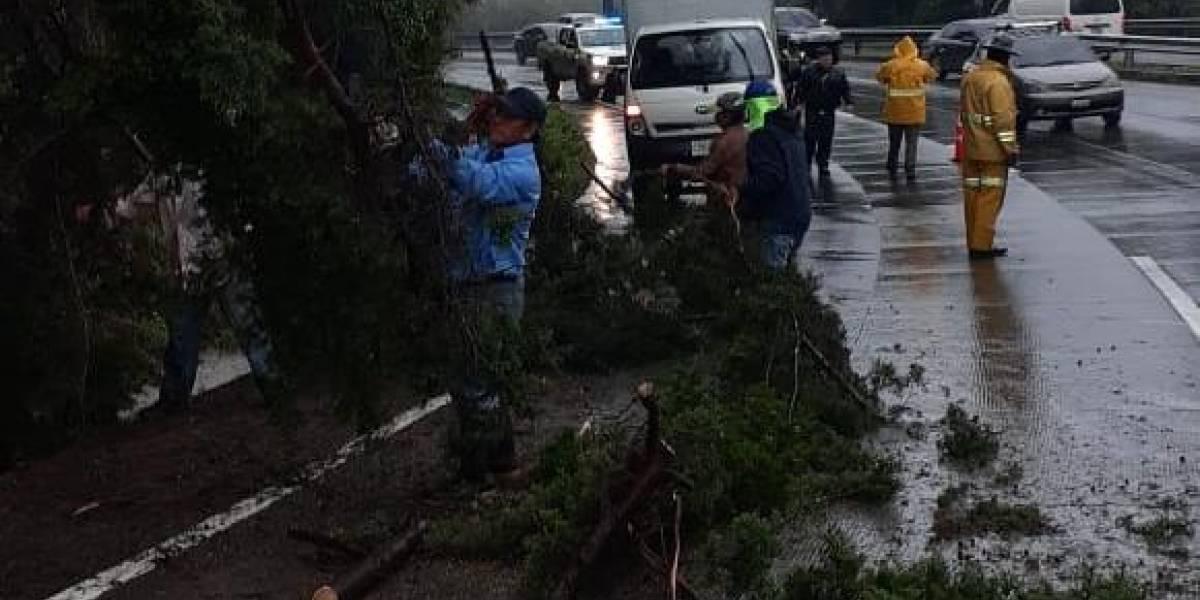 Tres árboles más caen en la zona 9 capitalina y Mixco