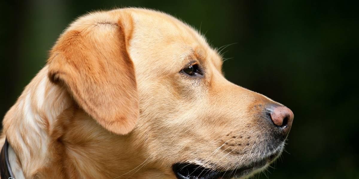 Explosão de campo minado mata cachorro e deixa criança gravemente ferida