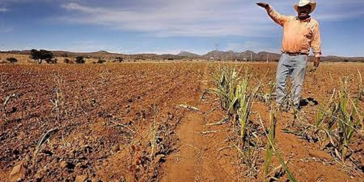 Sequías podrían afectar al sector ganadero a nivel nacional: Aristóteles Vaca