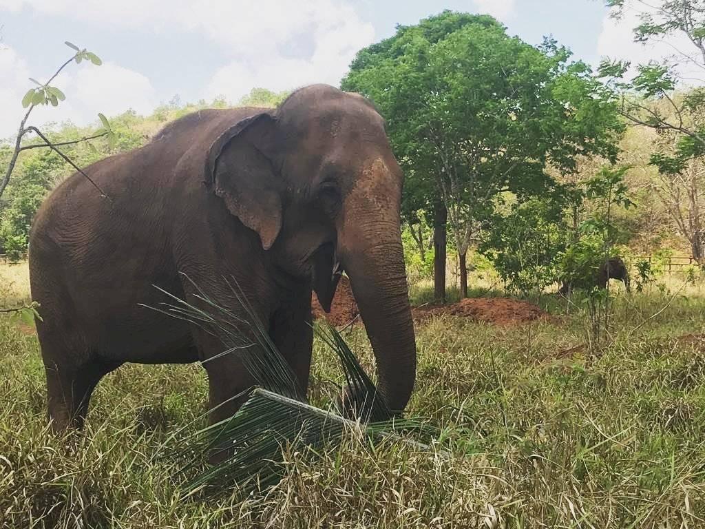 Elefanta chilena Ramba