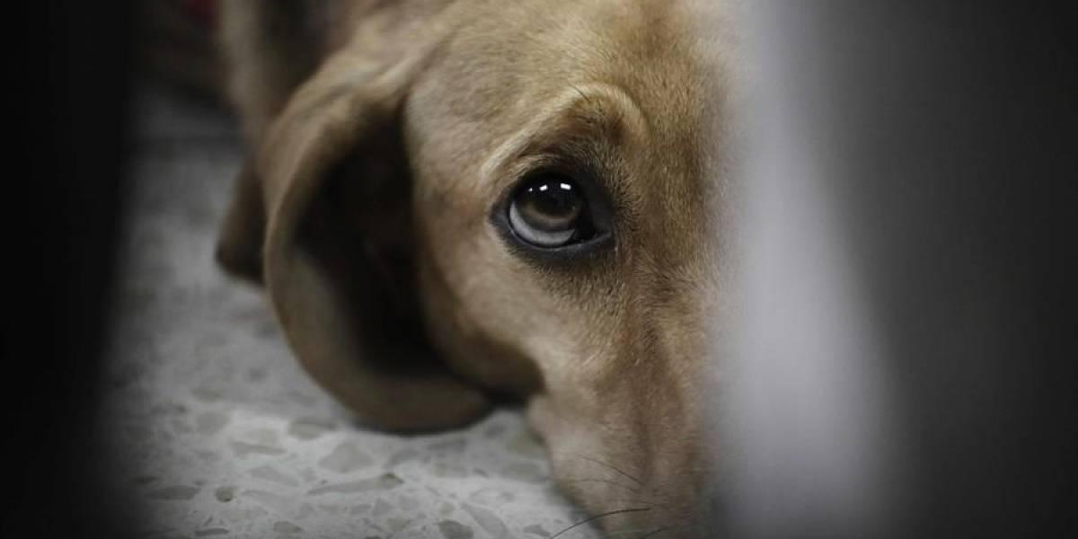 Entró en funcionamiento grupo especial para judicializar casos de maltrato animal