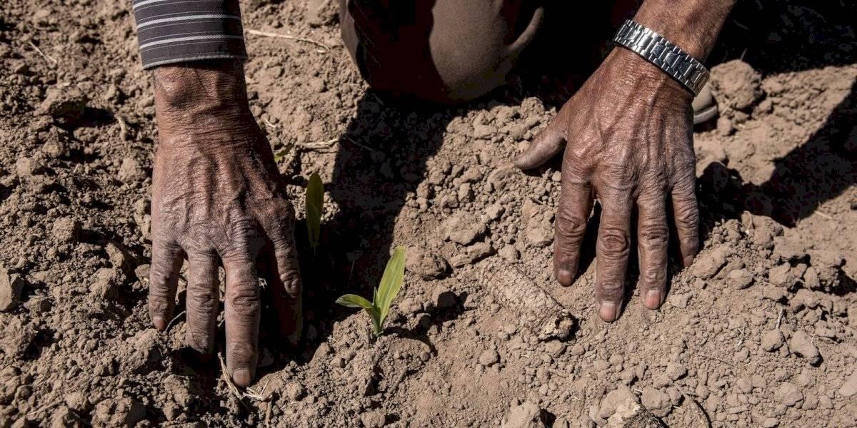 Surge 'Morena es Tu Campo' para impulsar actividades agrícolas
