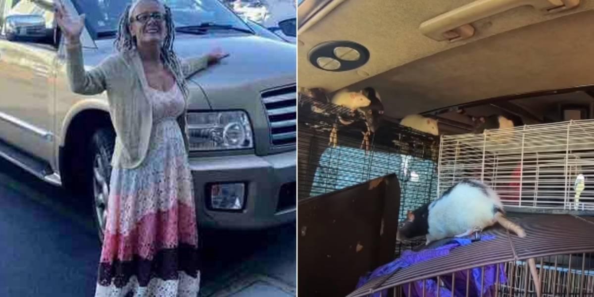 Gravam resgate de mais de 300 ratos que moravam com mulher em van