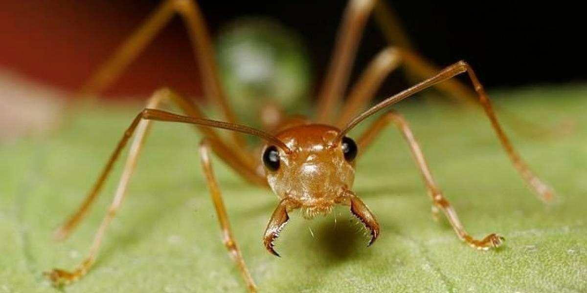 Increíble: Estudio revela la importancia que tienen las hormigas para la vida de las plantas