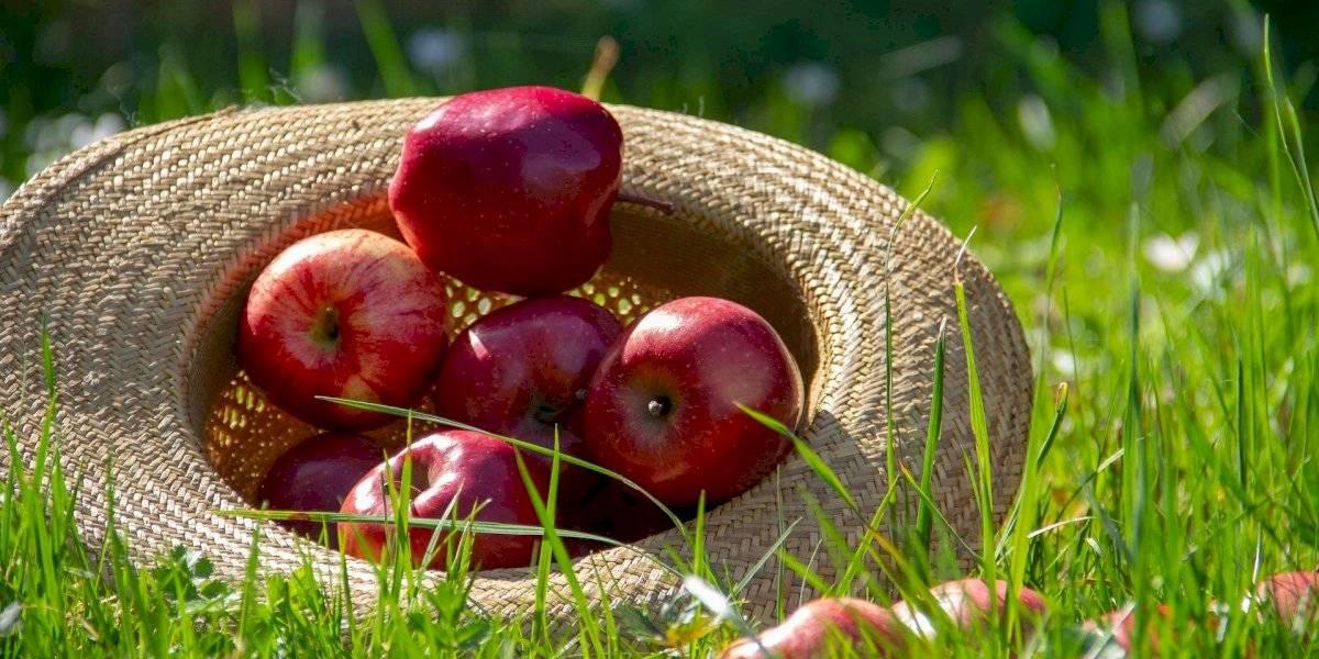 Vermelhas, redondas e crocantes: conheça os benefícios da maçã para a saúde