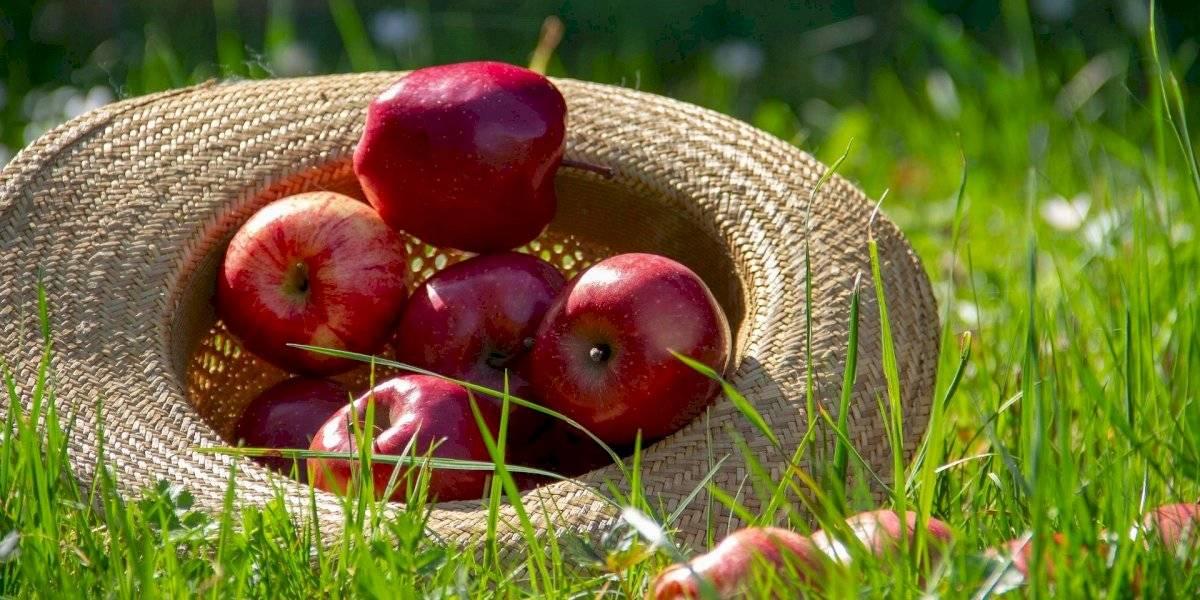 Estes 3 alimentos do dia a dia podem ser tóxicos e fazer mal para qualquer pessoa