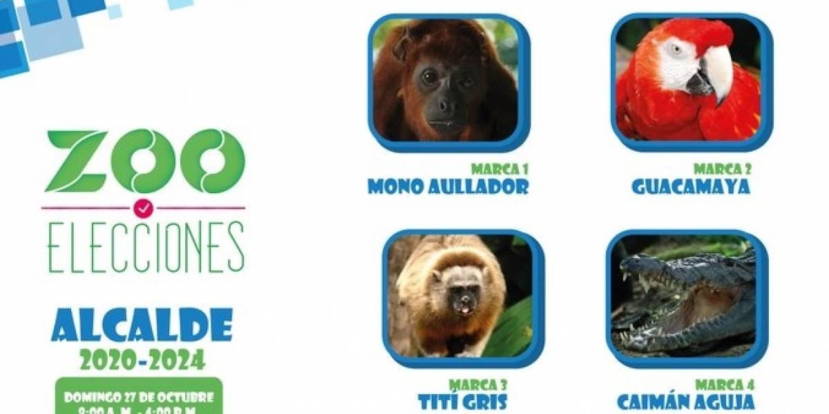 Un mono, un tití, una guacamaya y un caimán tras la alcaldía del Zoológico de Barranquilla