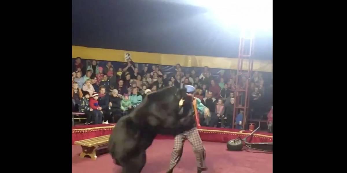 VIDEO. Oso ataca a su domador en pleno acto en un circo