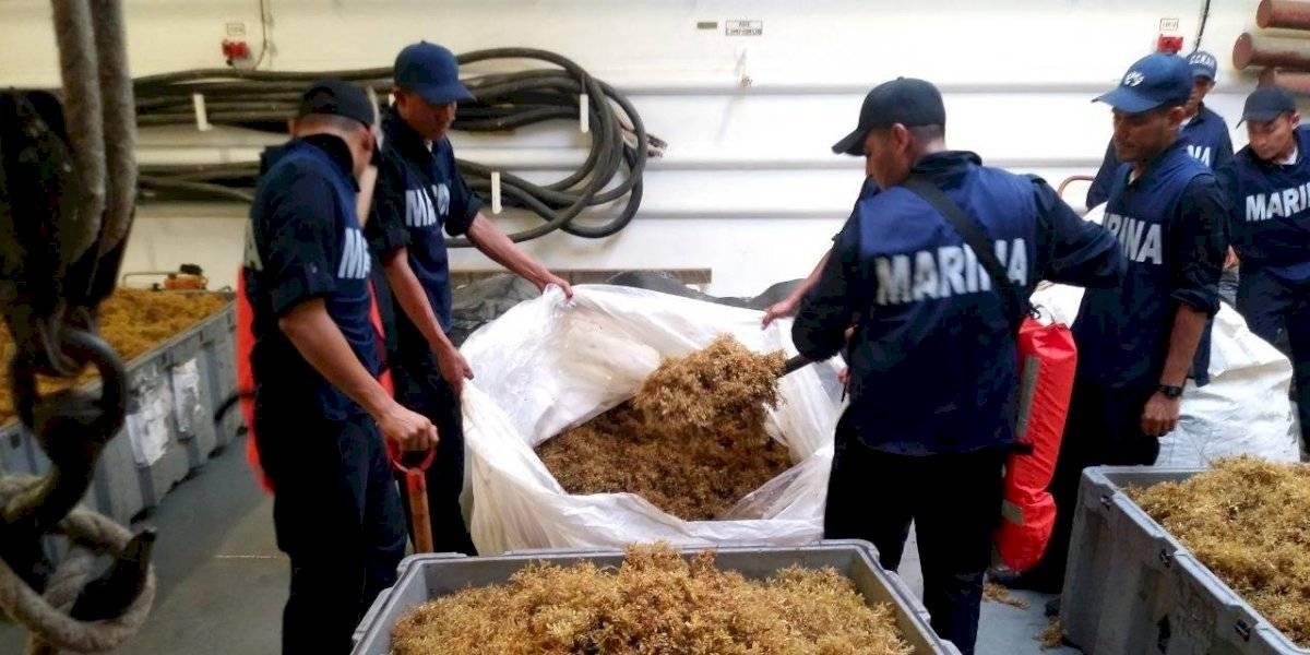 Marina ha recolectado más de 80 mil toneladas de sargazo en Quintana Roo