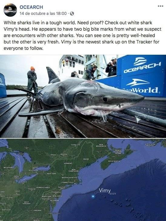 Tiburón Ciencia