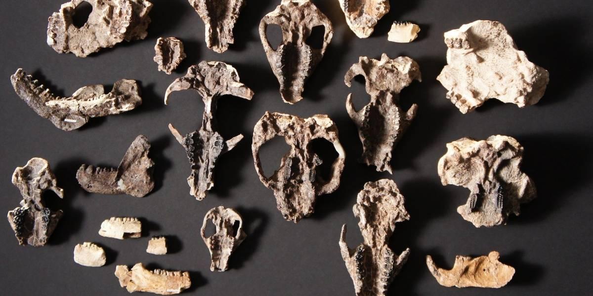 Fósiles muestran cómo se recuperó la vida tras meteorito