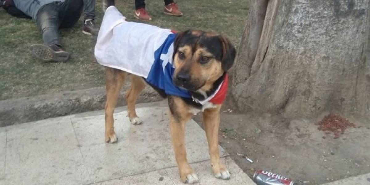 Chile: perro rompió pelota con la que jugaban militares y civiles en una protesta