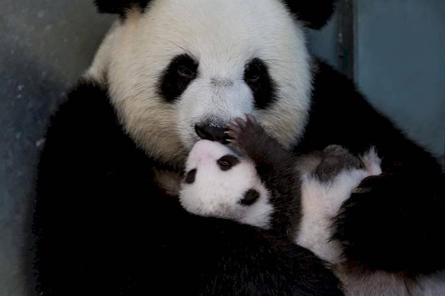 Pandas en Berlín
