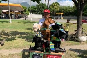 Perros en la Vuelta Ciclística