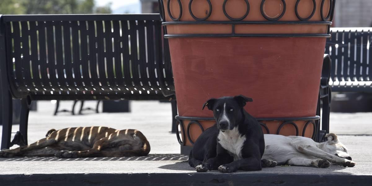 Buscan penas de hasta 2 años para quien maltrate animales