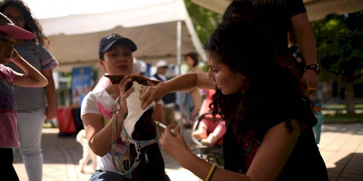 Lanzan jornada de vacunación antirrábica para mascotas