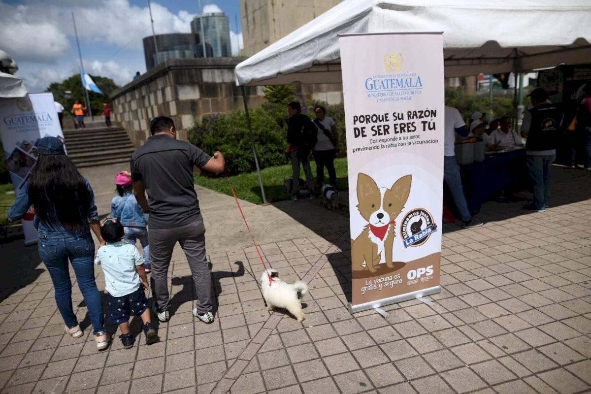 La campaña de vacunación contra la rabia finalizará en noviembre. Foto: Oliver de Ros