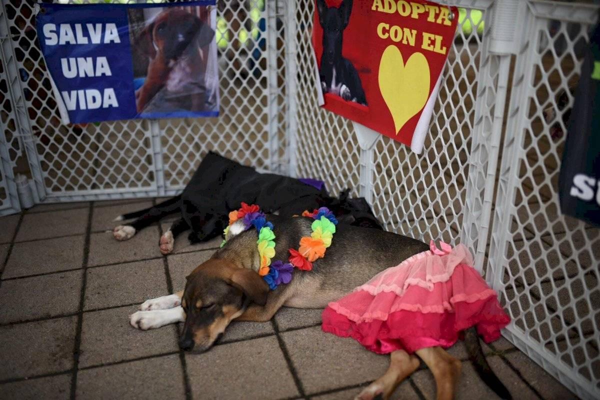 Perros en adopción. Foto: Oliver de Ros