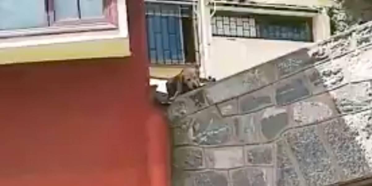 (VIDEO) Un tierno perro quería jugar con su hueso en marcha en Valparaíso