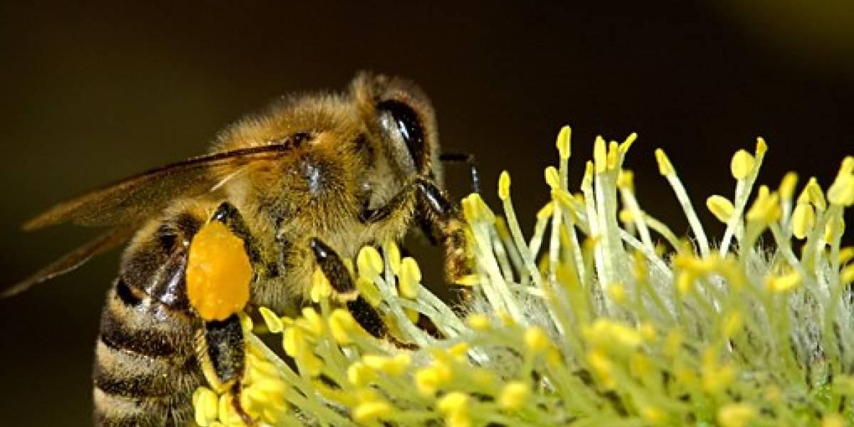 Nueva evidencia demuestra que están disminuyendo los insectos en el planeta