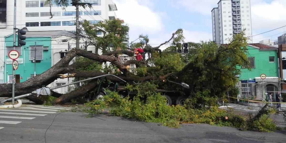 Árvore cai em caminhão na avenida Pompeia e uma pessoa fica ferida