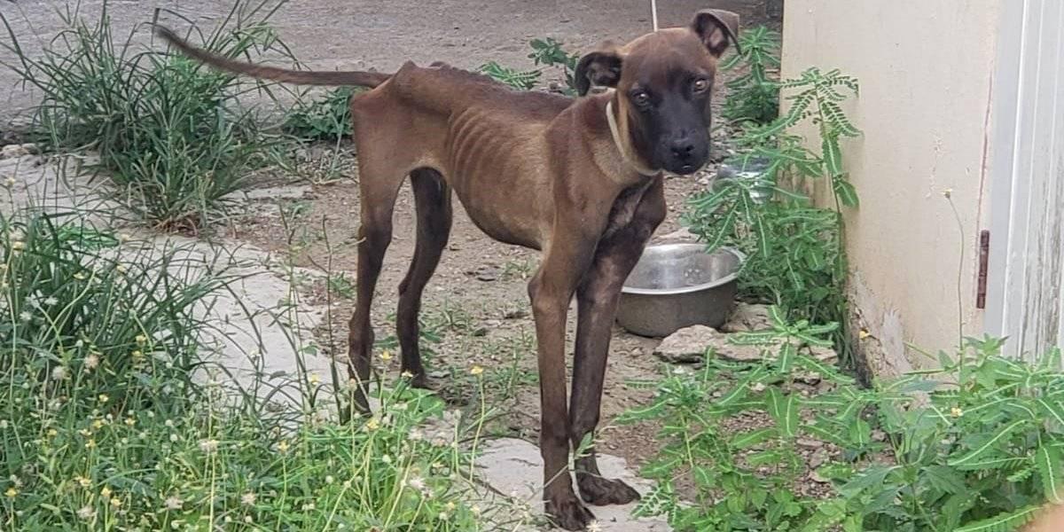 Radican cargos por abandono a perro en Juncos