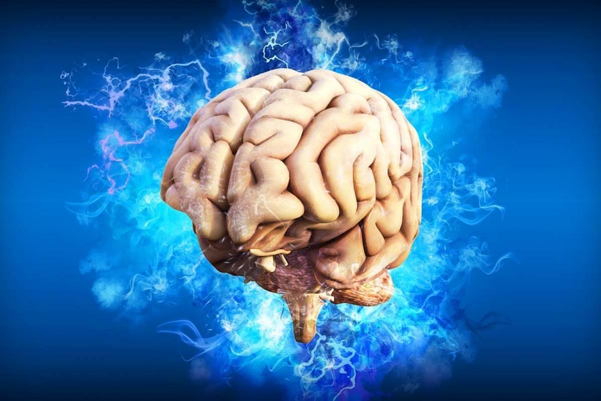 CIENCIA: logran captar el momento exacto en que nuestro cerebro graba  recuerdos mientras dormimos