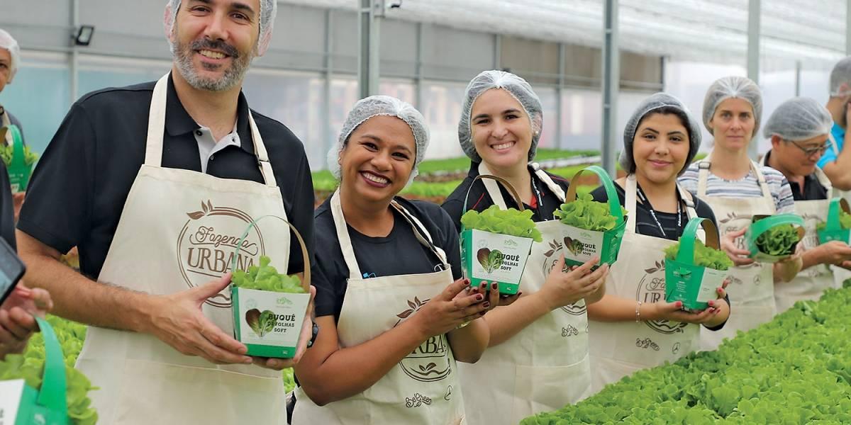 Fazenda tecnológica em São Bernardo vai produzir 2 toneladas de verduras