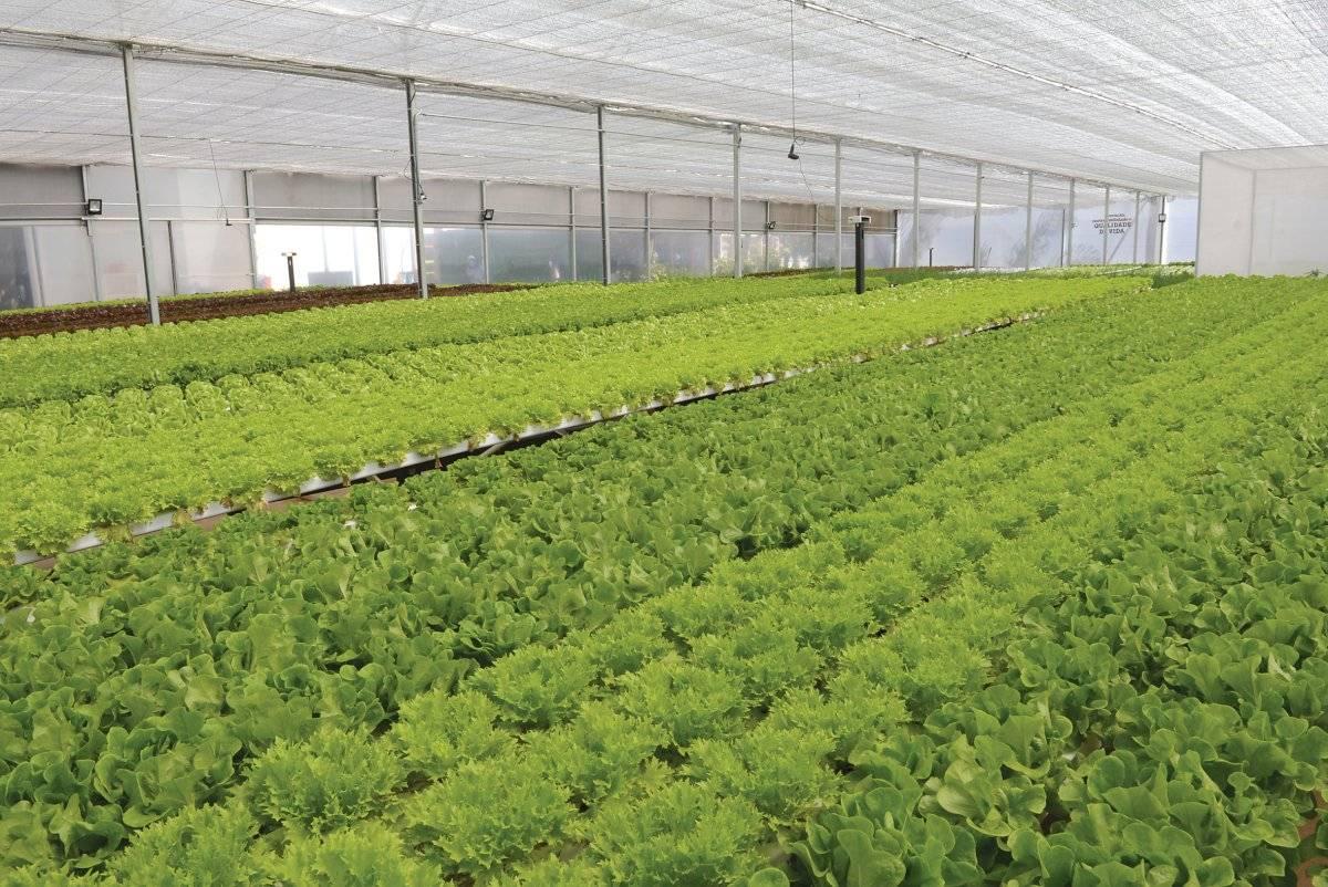 Produção de hortaliças na fábrica da Mercedes-Benz