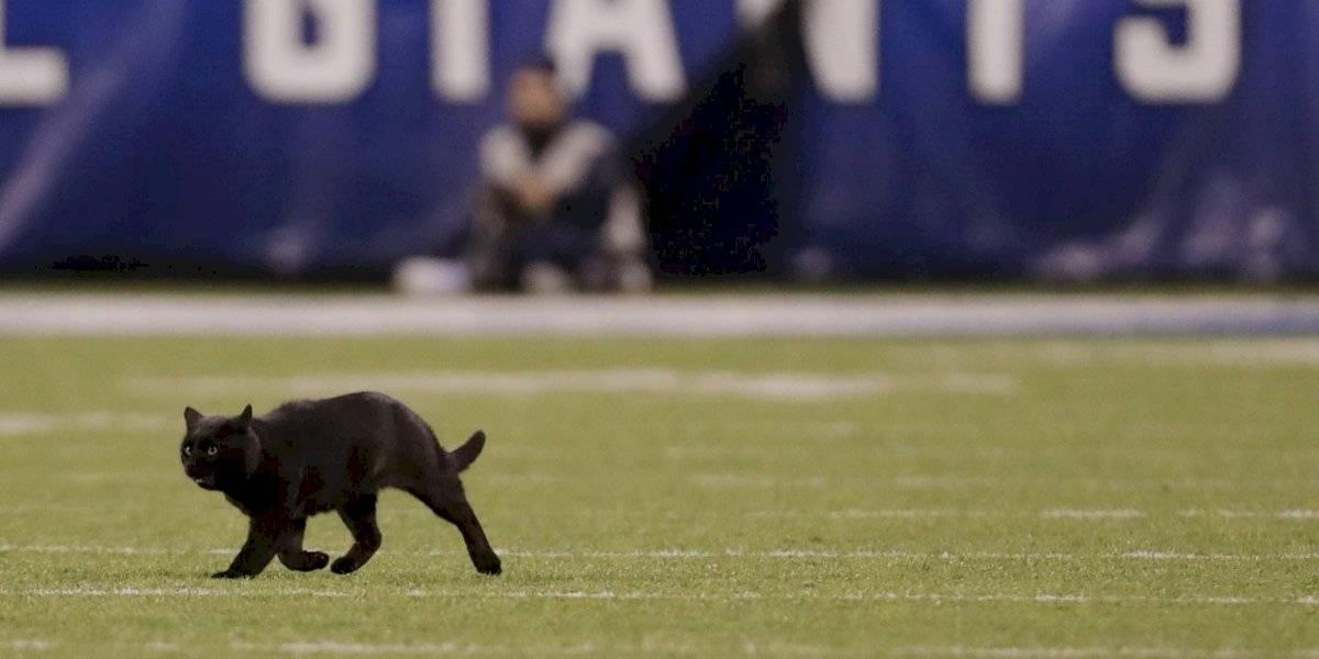 """¿Sólo pasa en Chile? Un gato negro interrumpió partido de la NFL y """"mufó"""" a New York Giants"""
