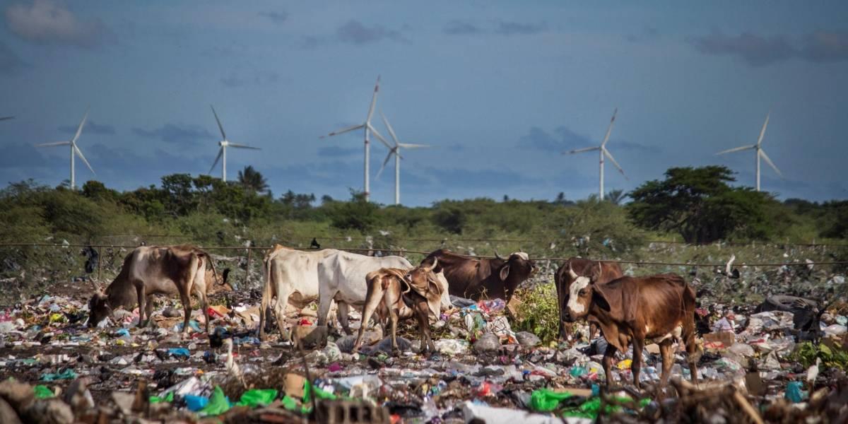 Miles de científicos dan tremendo espaldarazo al cambio climático: Suscriben carta para declarar emergencia global