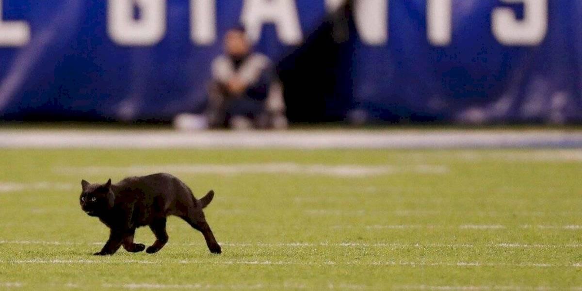 VIDEO: Un gato negro invade la cancha en el Giants vs Cowboys