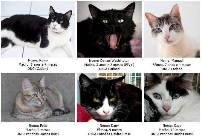 Gatos para adoção no Club Homs, Av. Paulista, 10 de novembro de 2019