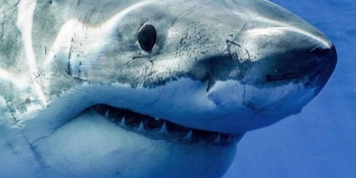 Vídeo de ataque de tubarão branco em câmera lenta faz sucesso nas redes sociais