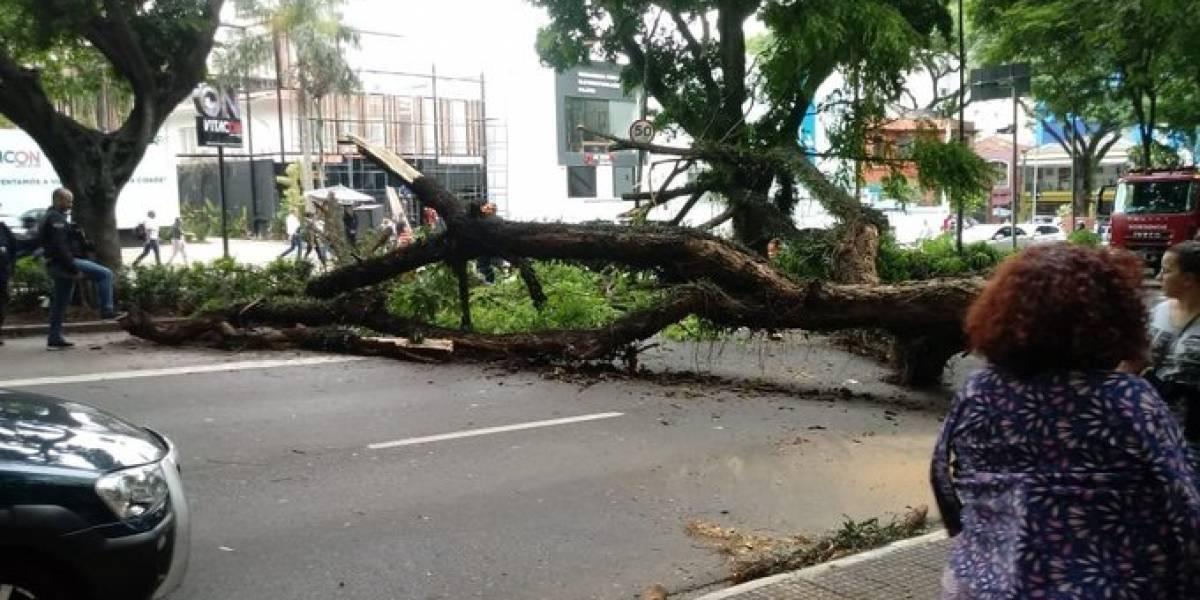 Avenida Rebouças fica travada após queda de árvore