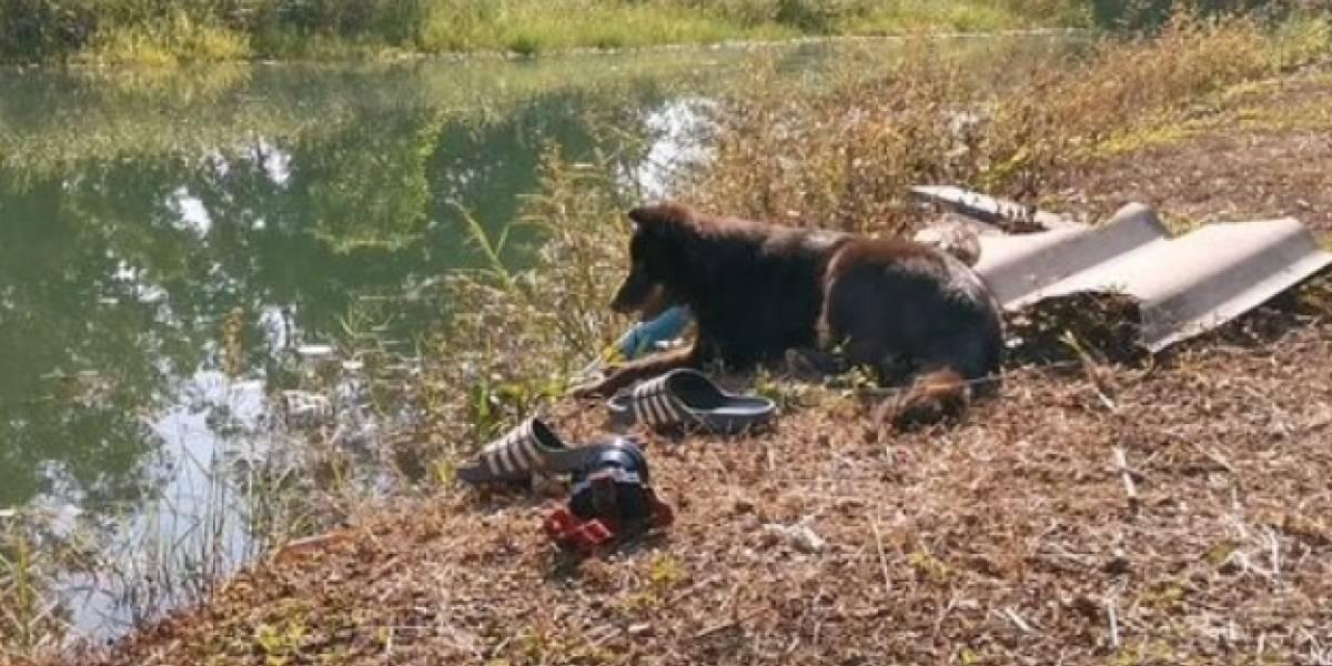 Un perro espera en la orilla de un lago para volver a ver a su dueño que murió ahogado