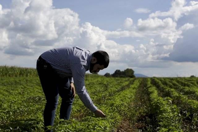 Imagen del 20 de septiembre de 2019 de Oswaldo Navarro revisando una planta de chía en un sembardío de la marca Onavsa, en Tepatitlán de Morelos, estado de Jalisco, México Xinhua/Francisco Cañedo