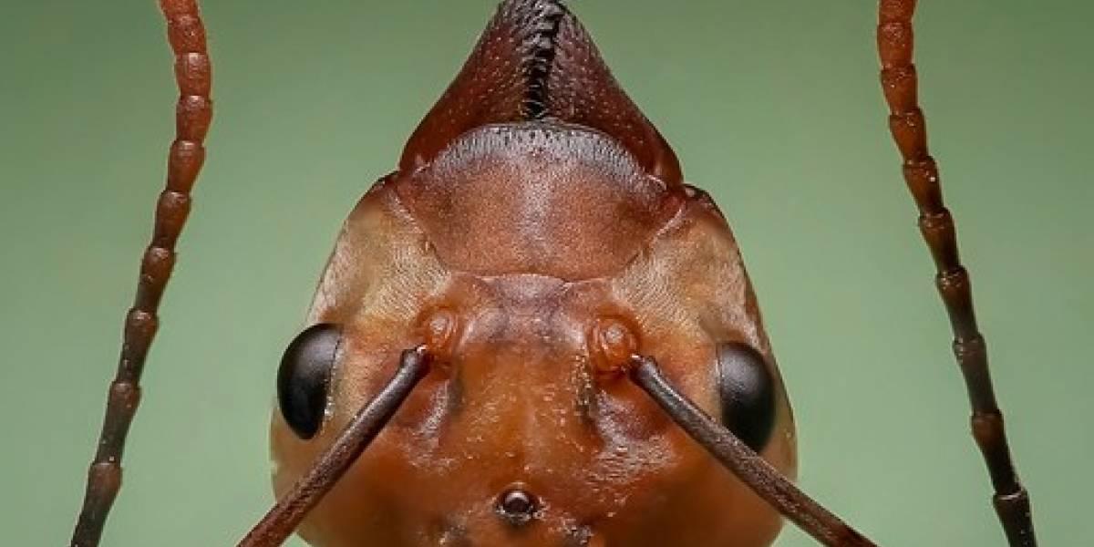 Hormigas caníbales escapan de un búnker nuclear en Polonia