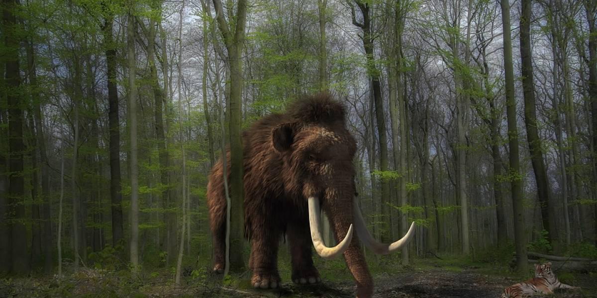 Gran momento histórico en México: Encontraron la primera trampa de mamut del mundo entero