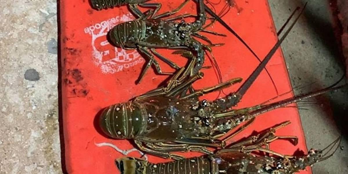 Incautan pesca ilegal en la Reserva Marina Arrecifes de la Isla Verde