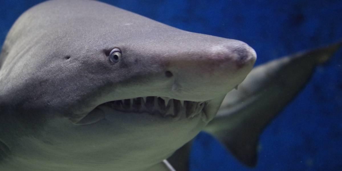 Tubarão salta da água e arranca garoto de barco