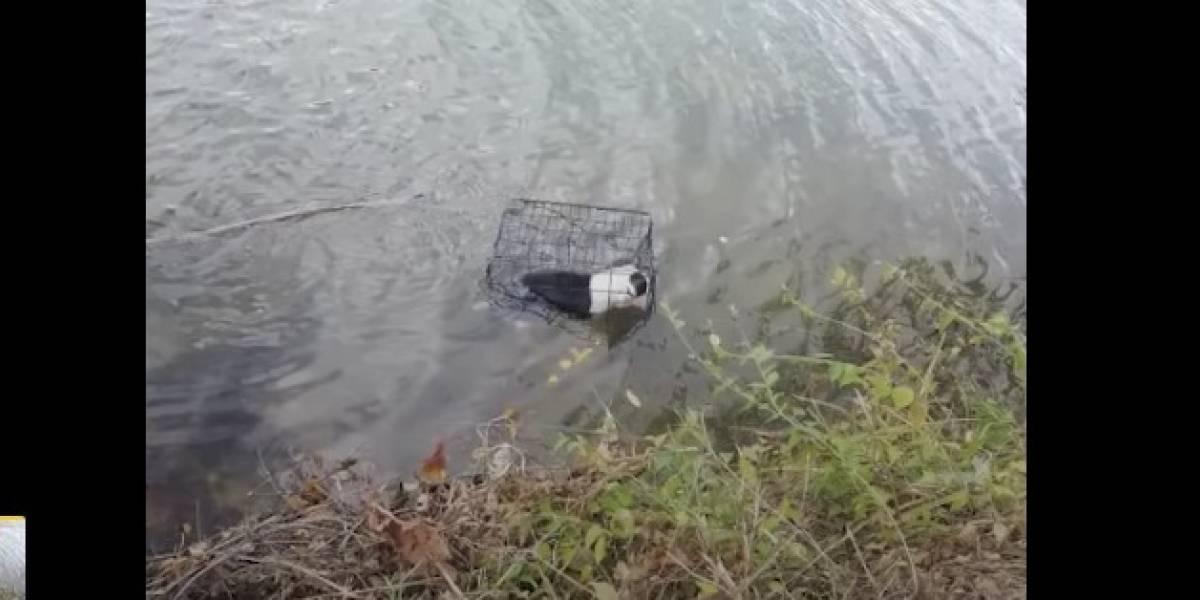 ¡Indignante! Un cachorro es lanzado dentro de una jaula a un lago