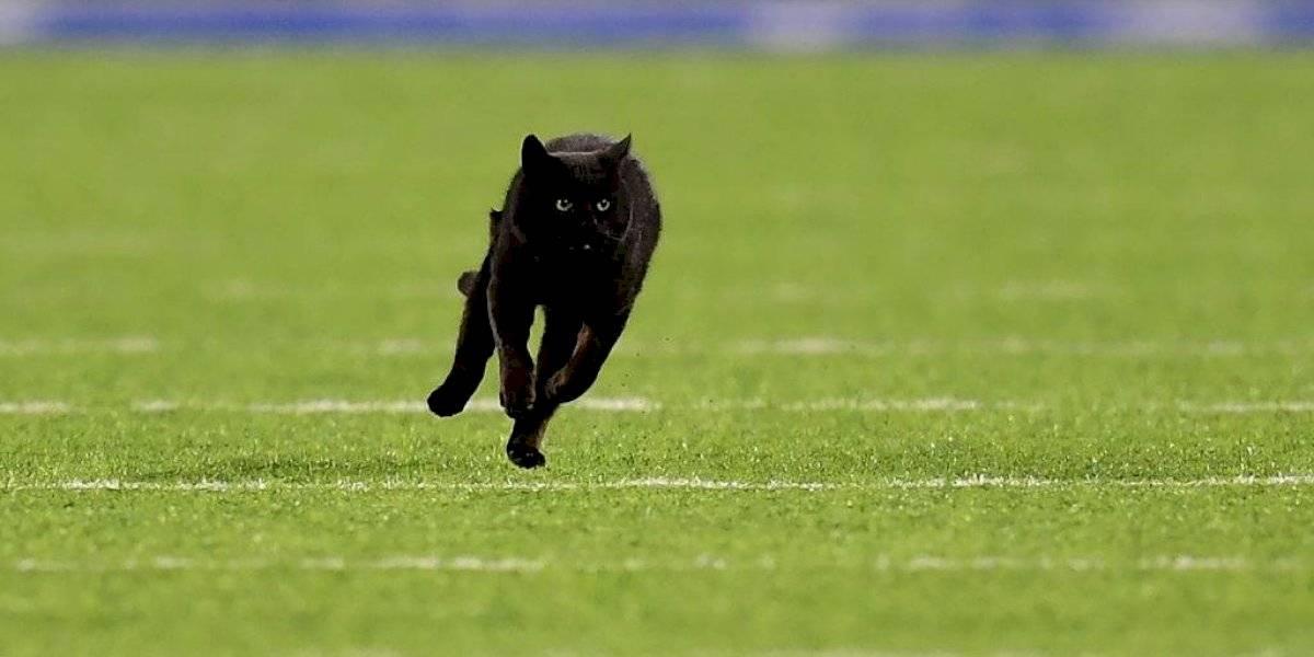 Gato que interrumpió juego de la NFL sigue suelto