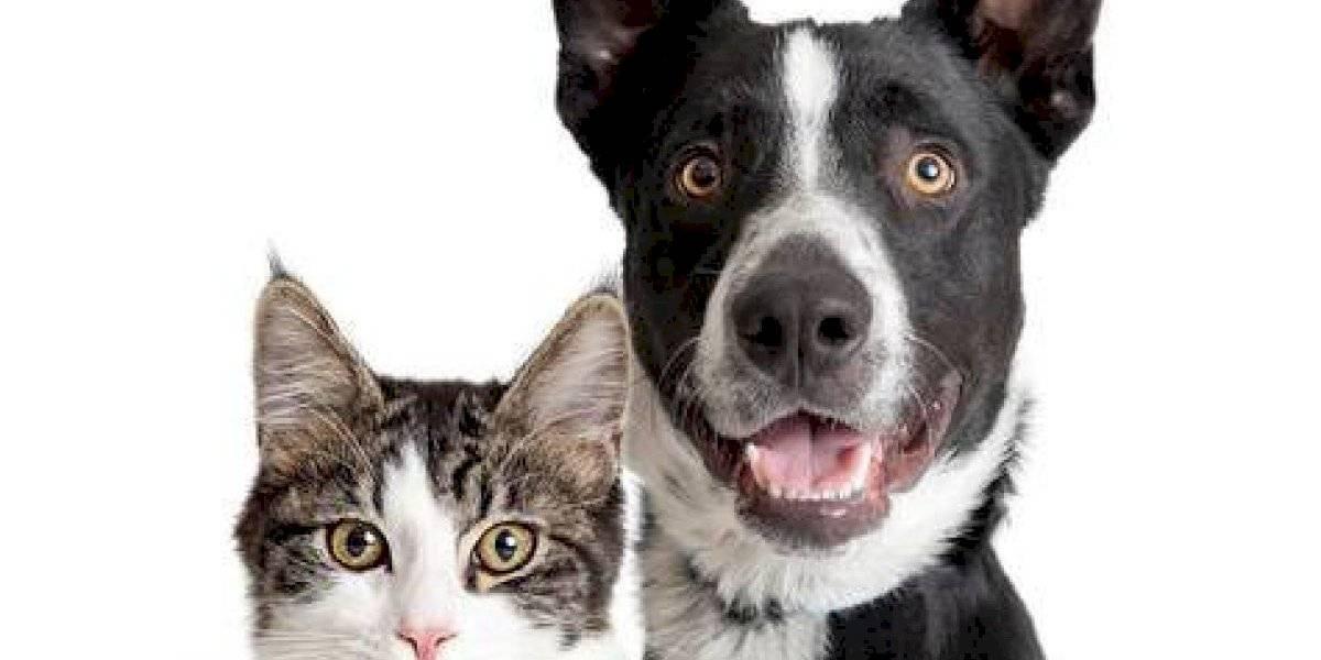 Mascotas: El reino del lifestyle