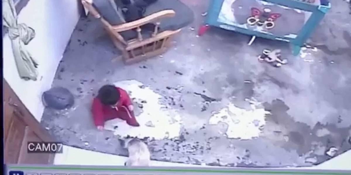 Vídeo flagra momento em que gato salva bebê de cair de escada