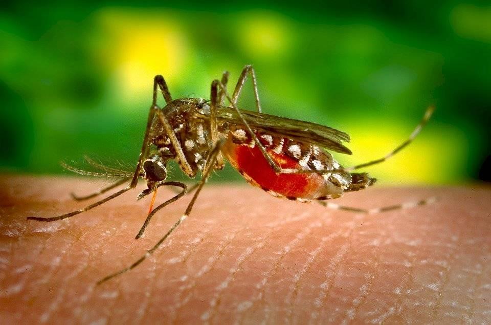 Coronavirus: estas son las ventajas que Latinoamérica tiene para combatir la pandemia